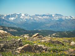 P6260420 (dicky c) Tags: nature nationalpark yellowstone em5ii omdem5ii