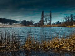 Lake Blue (Puck51) Tags: blue trees sky cloud lake snow water reeds ripples penyffordd