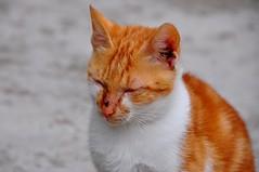 Stop Ginger bullying (naromeel) Tags: croatia dubrovnik