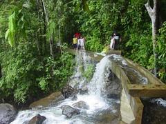 DWater falls in Sinharaja Rain Forest  Sri Lanka