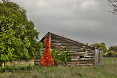 Old house, Sefton, Canterbury, New Zealand (brian nz) Tags: old newzealand chimney house building abandoned home rural ruins decay farm cottage canterbury derelict dilapidated deterioration sefton whare oldandbeautiful oncewashome