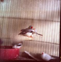 birds cage dust hasselblad500cm meidoonkohne