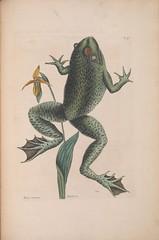 Anglų lietuvių žodynas. Žodis south american bullfrog reiškia pietų amerikos bullfrog lietuviškai.