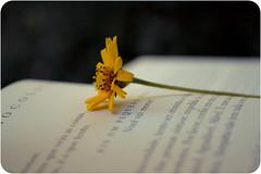 Eis um pequeno fato: (Tas S. Bordignon) Tags: brazil flower brasil book nikon flor morte livro ameninaqueroubavalivros d3100