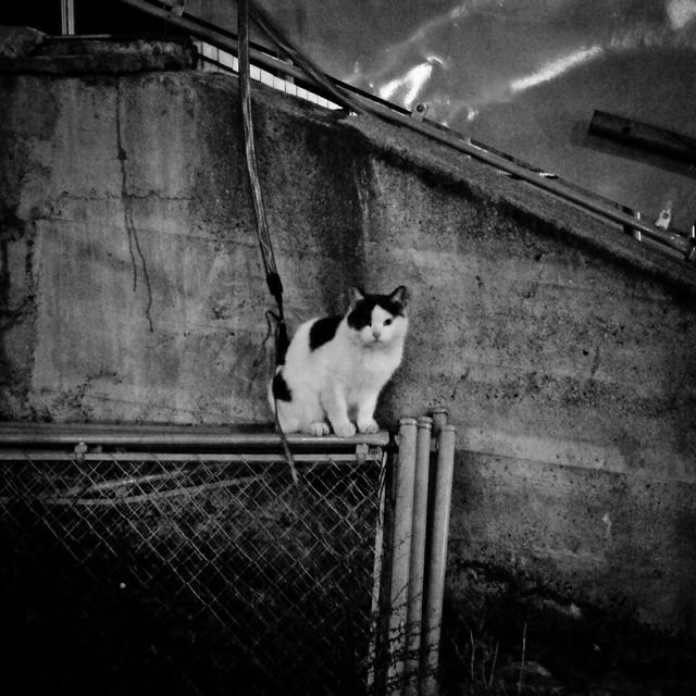 Today's Cat@2012-03-15