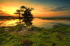 UNSIGN,,, (ManButur PHOTOGRAPHY) Tags: ocean longexposure morning sea sky bali cloud reflection green beach nature water sunrise canon indonesia landscape island photography eos three sand scenery aqua asia view filter shore nd lowtide usm filters polarizer efs 1022mm hitech tonal sanur contras threes eastasia bakau canonefs1022mmf3545usm mangroove polarize pasirputih gnd f3545 sillhuette 450d sillhuet mertasari manbuturphotography
