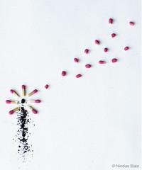 Life (Nicolas Blain) Tags: life flower fleur photography death photographie mort birth petal cycle naissance pétale vie nicolasblain