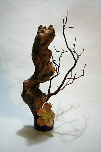 Sculptural form-driftwood, manzinita and helleborus
