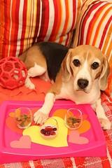 Be Mine! (Kaiser the Beagle) Tags: pink dog beagle digital canon eos valentinesday catchycolorspink 450d canonef28mmf18usm rebelxsi kissx2 eosdigitalrebelxsi eosdigitalrebelxsi450dkissx2 dailydogchallenge eosdigitalkissx2