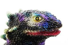 黒蜥蜴 画像