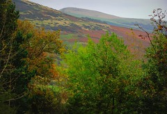 Colours soften the heart (Dazzygidds) Tags: trees mountain vibrant derbyshire hill scene screen textures serenity serene bracken nationaltrust tranquil darkpeak tangled peakdistrictnationalpark moorland highpeak gorse castleton winnatspass hopevalley peverilcastle