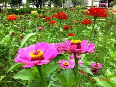 Jardim da igreja Paróquia Sagrada Família - Goiânia, Goiás, Brasil (Alan Bailão ⎝⏠⏝⏠⎠) Tags: brasil família igreja praça sagrada jardins goiânia goiás flôres paroquia