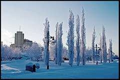 Tall snow trees (Cool breeze pics) Tags: city winter urban snow ice alaska frozen nikon downtown anchorage d60