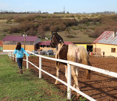 At the Ranch - Pt. I (Been Around) Tags: ranch horses horse animal tiere spring europe niceshot eu bulgaria april pferd tier 2012 frhling velikotarnovo bul bulgarien arbanasi horseranch worldtrekker
