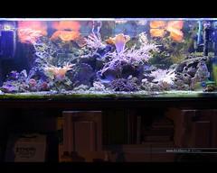 Meerwasser Aquarium 6852 (Stefan Beckhusen) Tags: light aquarium led fishtank corals saltwater meerwasser salzwasser