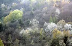 Come in un quadro.. (Lucia Mondini) Tags: tree verde green alberi colours couleurs vert arbres albero colori arbre couleur arbores