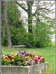 Prendre le temps  de s'asseoir....! (LILI 296...) Tags: france fleur composition spring midi arbre printemps banc pensée pyrénées canonpowershotg12