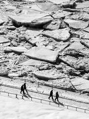 Promenade du dimanche (Patrice StG) Tags: winter blackandwhite bw ice noiretblanc hiver nb qubec glace d700
