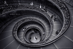 double helix. (kvdl) Tags: rome roma repetition rhythm spiralstaircase windingstaircase vaticanmuseums repeatingpattern giuseppemomo canonef1635mmf28liiusm simonettistaircase kvdl TGAM:photodesk=repeatingpatterns2012
