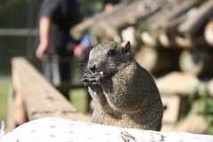 タネを食べるリス (Morita Kujira) Tags: animal 動物 かわいい リス 小さい