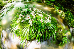 (wrc213) Tags: park travel light wild wallpaper mountain plant motion tree green tourism nature wet water ecology beautiful beauty rock stone creek forest river landscape flow waterfall leaf moss spring cool scenery stream day view natural outdoor background scenic free peaceful tourist fresh fisheye clean foliage fluid environment flowing splash cascade tract