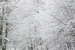 Ragantela .. (Madmilox) Tags: italy sun snow tree ice alberi spider nikon italia web tuscany neve toscana sole fronds pistoia ghiaccio abetone fronde ragnatela intreccio d5000