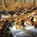 Downstream Cascades