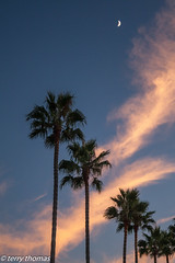 Sunset (Terrynet1) Tags: ca lajolla palmtrees 2011