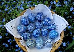 kék tojások / blue eggs (debreczeniemoke) Tags: blue easter moldova easteregg húsvét bucovina bukovina kék paintedegg moldva decoratedegg hímestojás húsvétitojás festetttojás canonpowershotsx20is ornateegg