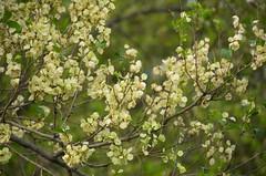 Bozen (anuwintschalek) Tags: italien italy tirol spring seeds april tyrol sdtirol frhling bozen southtyrol 2014 samen kevad itaalia d7k tirool seemned nikond7000 18140vr lunatirool