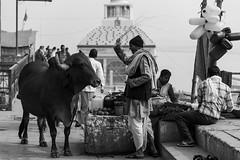 @ Ghats of Varanasi (Well-Bred Kannan (WBK Photography)) Tags: travel bw india monochrome up river mono nikon indian monotone varanasi d750 hindu kashi ganga ganges ghats banaras trourism kannan kasi wellbred uttarpradesh wbk weekendwalk holyriver blackandwhite blackwhite uttarpradesh travelphotography ghatsofvaranasi wbkphotography kannanmuthuraman nikond750