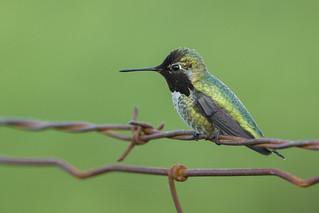 A bird on a wire ... I know... so cliché!