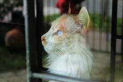 Glass (ojibwaarts) Tags: morning light pet cats eye window glass cat eyes softlight cateye