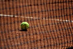 ball, please! (marco prete) Tags: red net yellow rouge amarillo giallo tennisball rosso pista tenniscourt rete terrarossa claycourt campodatennis pallinadatennis