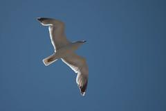 Minorque (26) (Miarno) Tags: mer nature vacances soleil eau sable biosphere espagne plage menorca balares minorque