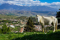 Berat, Albania (DitchTheMap) Tags: city travel blue red portrait sky horse india white foothills house mountain mountains color green nature beautiful grass animal standing truck hair landscape montana europe flickr cityscape looking outdoor farm background meadow pasture srinagar albania easterneurope gallatin berat 2016 sonamarg