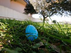 Egg Hunt (BurlapZack) Tags: grass easter treasure candy bokeh egg wideangle hidden unt universityofnorthtexas easteregghunt colliseum pack01 dentontx vscofilm osdhcp oakstreetdrafthousecocktailparlor olympusomdem5markii olympusmzuikoed1250mmf3563ez