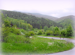 Spring landscape (Stella VM) Tags: road trees mountain green beautiful forest landscape spring bulgaria  vitosha           kladnitsa