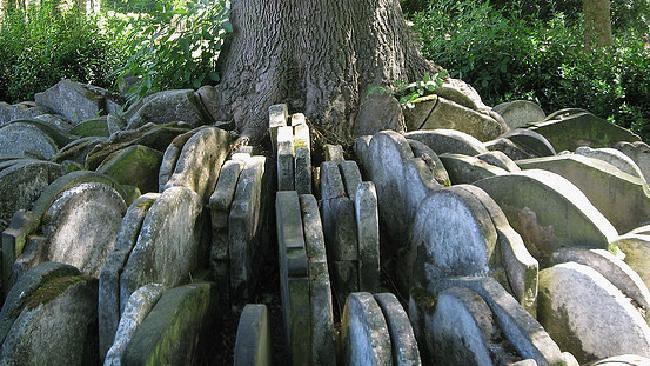 Bia mộ chôn dưới gốc cây
