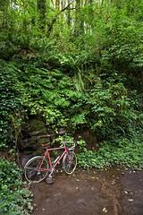Nice Mixed Terrain Riding in Forest Park (Franklyn W) Tags: oregon portland pdx forestpark bikeriding nwportland touringbike randonneuse twitter specializedsequoia mixedterrain 650bconversion tumblr rackbyjimg leifericksontrail