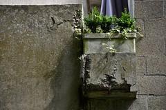 Concrete: Fragile companion (jacques_teller) Tags: brussels green concrete nikon belgium bruxelles vegetation constellations harmed nikonian nikonistas