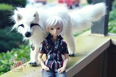 Wolf-Chrom & Chrom (crazykimochi) Tags: bjd fairyland chrom flam msd whitewolf balljointeddoll mnf minifee creaturesofnat posablewolfdoll