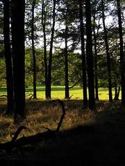 Den Wald... (dididumm) Tags: wood autumn fall sunshine forest woods herbst meadow wiese wald autumnal clearing sonnenschein lichtung herbstlich