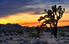 Listen To the Trees (Northern Straits Photo) Tags: california ca trees sunset tree landscape desert np joshuatreenationalpark ireenaworthyphotography northernstraitsphotography ireenanieuwenhuisworthyphotography