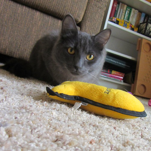 Day 18 Cat toy yellow