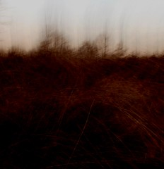 bog (wood_owl) Tags: trees winter ohio abstract blur texture nature contrast kent experimental dusk earth bog tone impression icm tamarack virginiachainfern intentionalcameramovement
