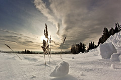 break on through (magnusl67) Tags: trees snow canon landscape sweden jmtland tanne samyang8mm magnuslgdberg