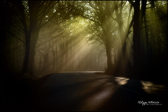 rvelations (philippe MANGUIN photographies) Tags: road trees tree nature forest nikon bretagne route arbres foret sunlights d90 broceliande rayonsdesoleil mygearandme philippemanguin