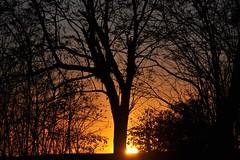 te envolvo em minhas silhuetas... (Ruby Augusto) Tags: trees sunset brasil silhouettes pôrdosol naestrada ontheroad árvores silhuetas notreatment cascavelpr