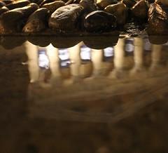TP_Aperture_2829 (Tara Plum) Tags: reflection philadelphia rain night puddle parkway artmuseum largeaperture
